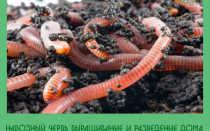 Как развести навозных червей в домашних условиях
