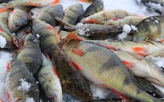 Как правильно приготовить манку для рыбалки видео