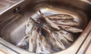 Как досушить вяленую рыбу дома
