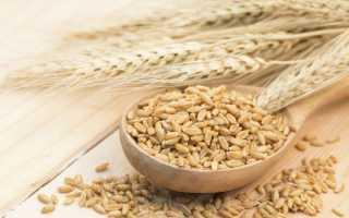 Как приготовить пшеницу