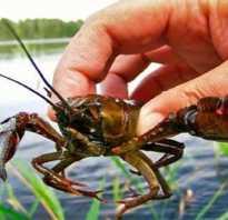 Как ловить раков в озере