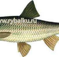 Елец рыбалка