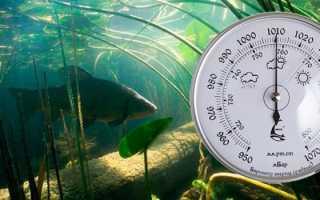 Зависимость клева рыбы от атмосферного давления