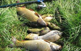Как хранить опарышей для рыбалки