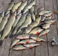 Какая рыба водится на волге