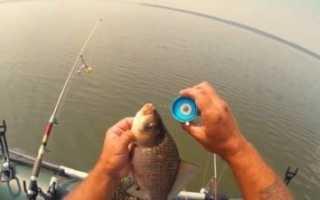 Ловля рыбы на соску