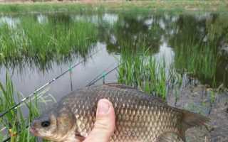 Ловля карася весной на поплавочную удочку видео