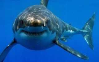 Акулы черного моря фото с названиями