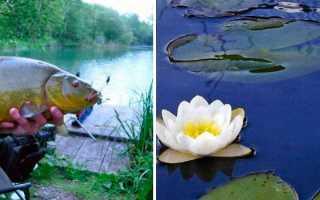 Как поймать линя на удочку