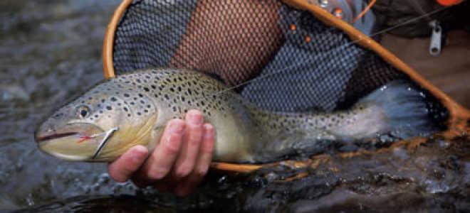 Как ловить форель на платном пруду