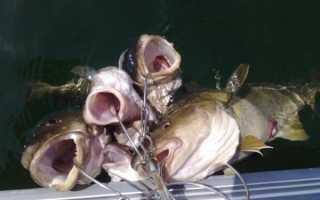 Как сделать кукан для рыбы своими руками