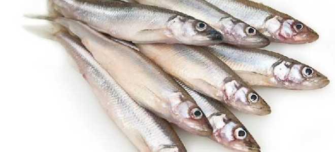 Корюшка речная или морская рыба