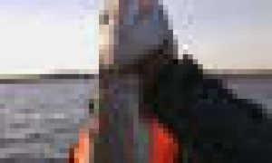 Видео ратан