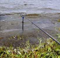 Как влияет ветер на клев рыбы