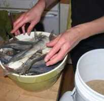 Как засолить рыбу для сушки