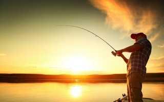 Ловля карася на пруду