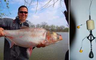 Как поймать толстолобика и на что ловить