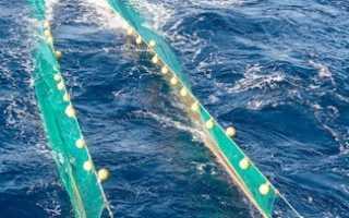 Виды сетей для ловли рыбы