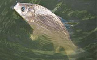 Ловля карася в июне на поплавочную удочку