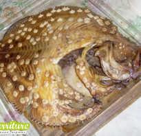 Калкан рыба балтийский