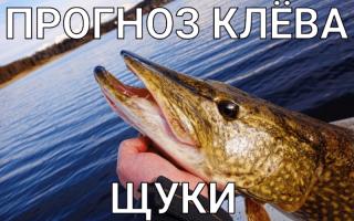 Какая будет завтра рыбалка